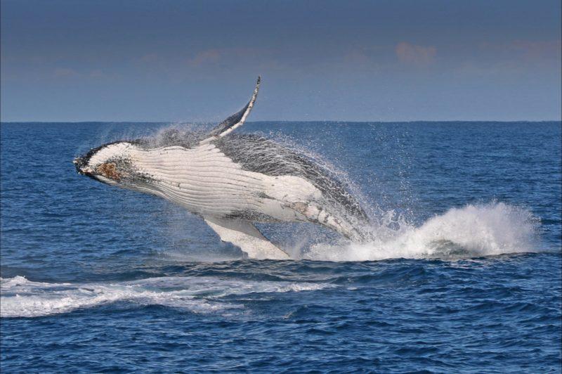 phillip island, whales, renee de bondt