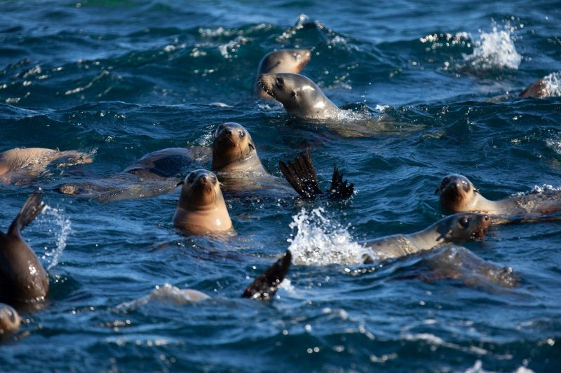 Looking for seals with Wilsons Promontory Cruises