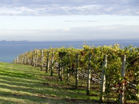 Epicurean Bellarine Adventures and Tours