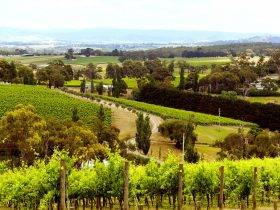 Yarra Valley from Hanrahans Winery