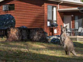 Wonderland Cottages kangaroo