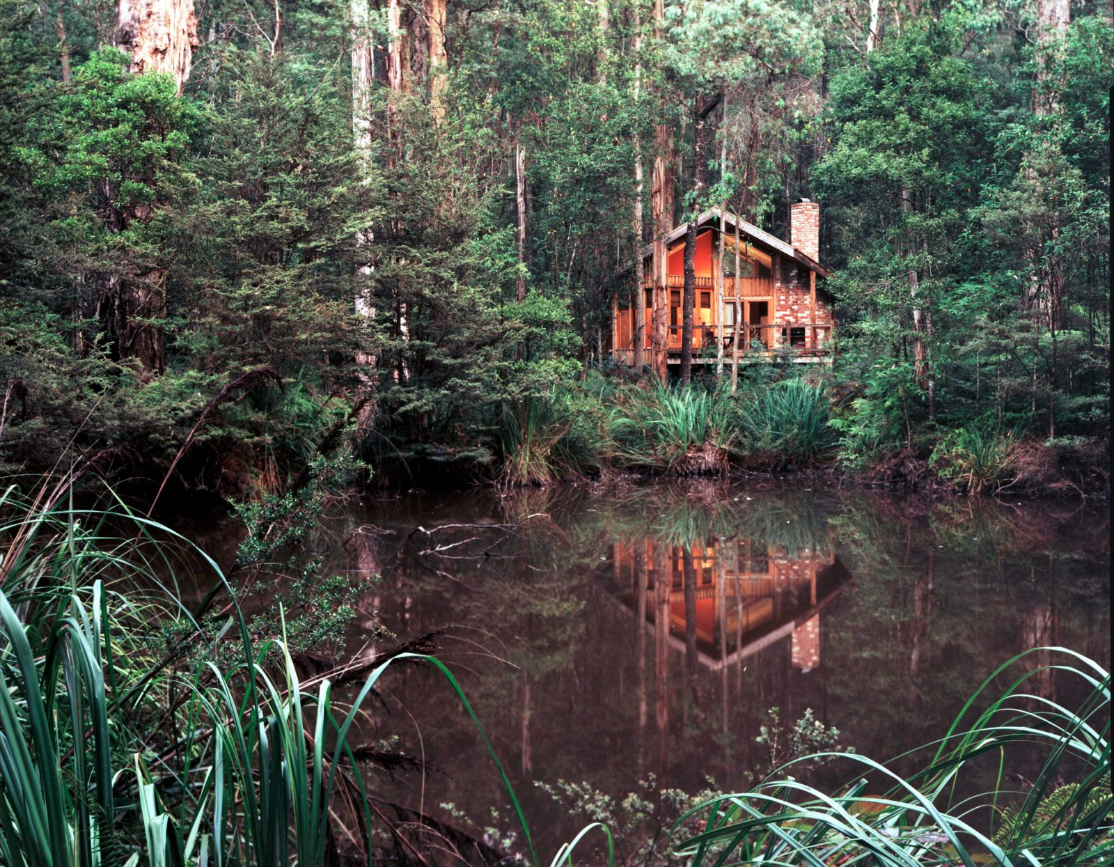 Woodlands Rainforest Retreat Laughing Ducks