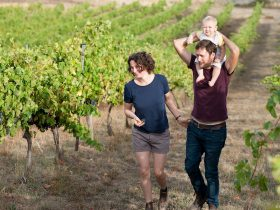 Henry, Harriet and Alby in the vines