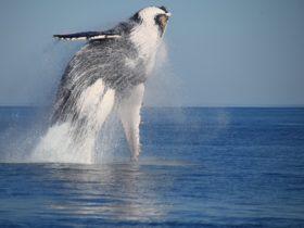 Absolute Ocean Charters, Broome, Western Australia