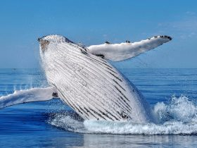 All Sea Charters Whale Watching, Busselton, Western Australia