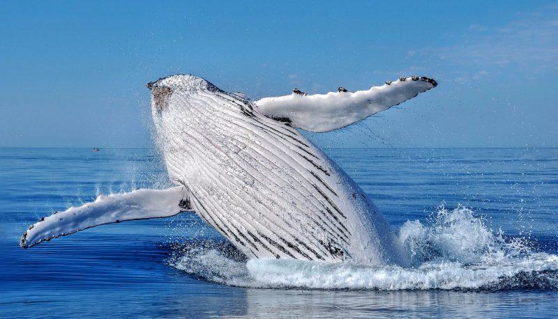All Sea Charters Whale Watching, Busselton, Western Australia