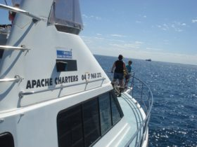 On the way to Rottnest Island to visit the Quokkas with Apache Charters on the Lady Grace