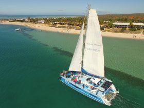 Aristocat 2 - Perfect Nature Cruises, Monkey Mia, Western Australia