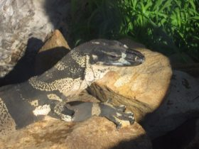 Armadale Reptile Centre, Wungong, Western Australia