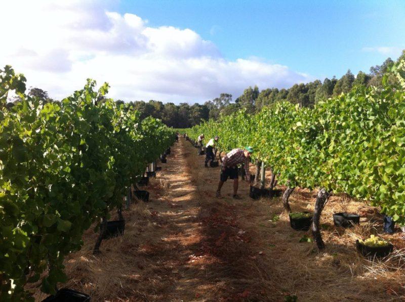 Ashbrook Wines, Wilyabrup, Western Australia