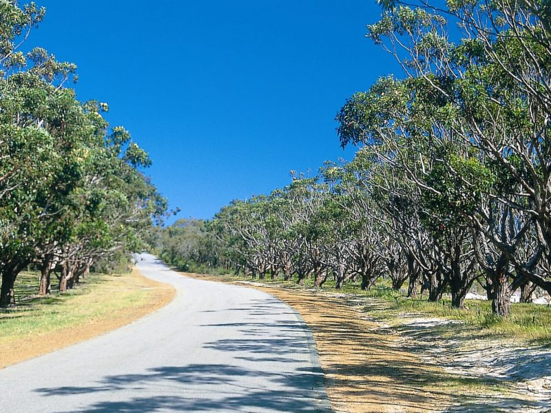 Avenue of Honour, Albany, Western Australia