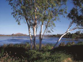 Bandicoot Bar, Kununurra, Western Australia