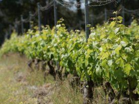 Barton Jones Wines, Donnybrook, Western Australia