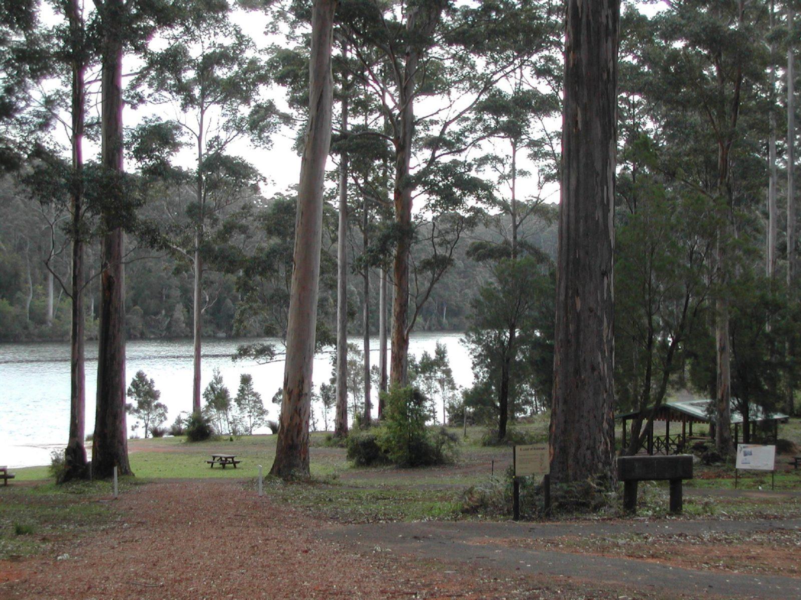 Big Brook Arboretum, Pemberton, Western Australia