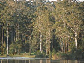 Big Brook Dam, Pemberton, Western Australia