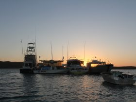 Blue Lightning Fishing Charters, Mandurah, Western Australia