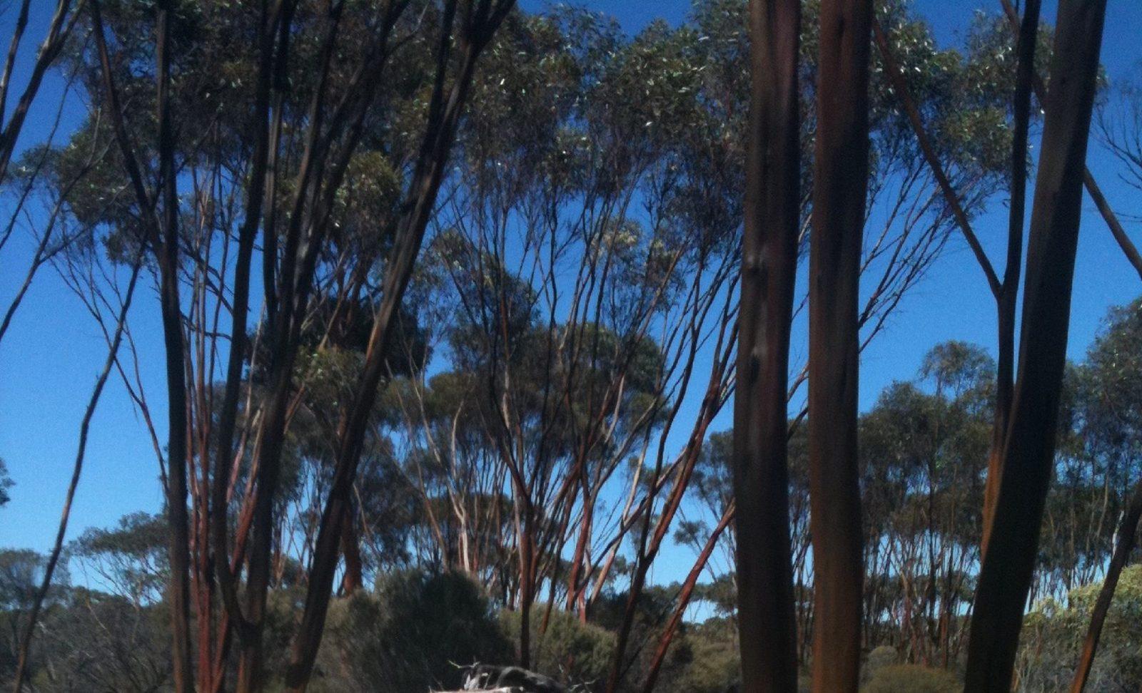 Boorabbin National Park, Boorabbin, Western Australia