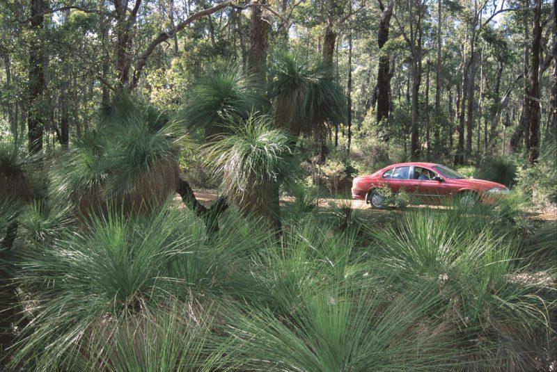 Bridgetown Jarrah Park, Bridgetown, Western Australia