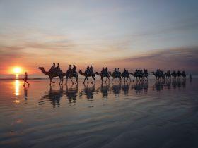 Broome Camel Safaris, Broome, Western Australia