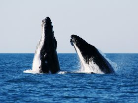 Broome Whale Watching, Broome, Western Australia