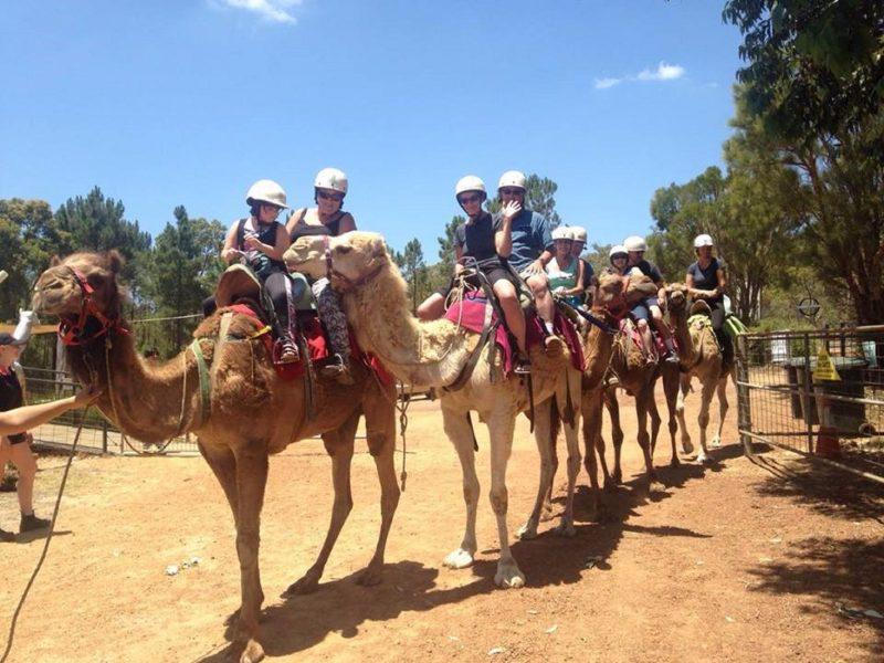 Calamunnda Camel Farm, Paulls Valley, Western Australia
