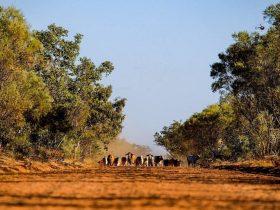 Call of the Kimberley, Broome, Western Australia