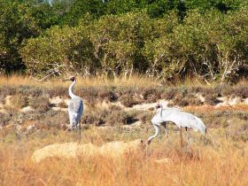 Cape Keraudren Nature Reserve, Port Hedland, Western Australia
