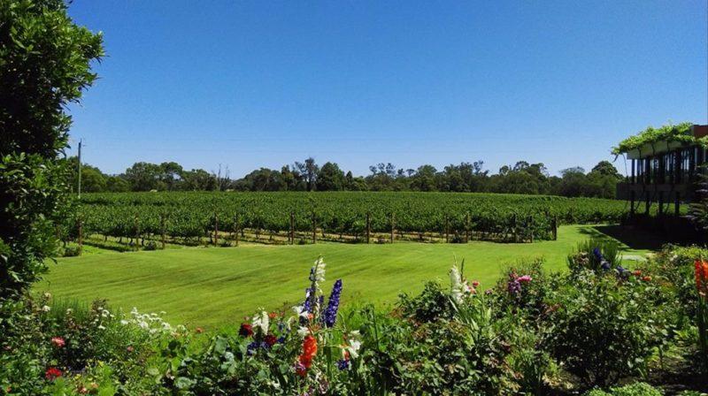 Capel Vale Wines, Capel, Western Australia