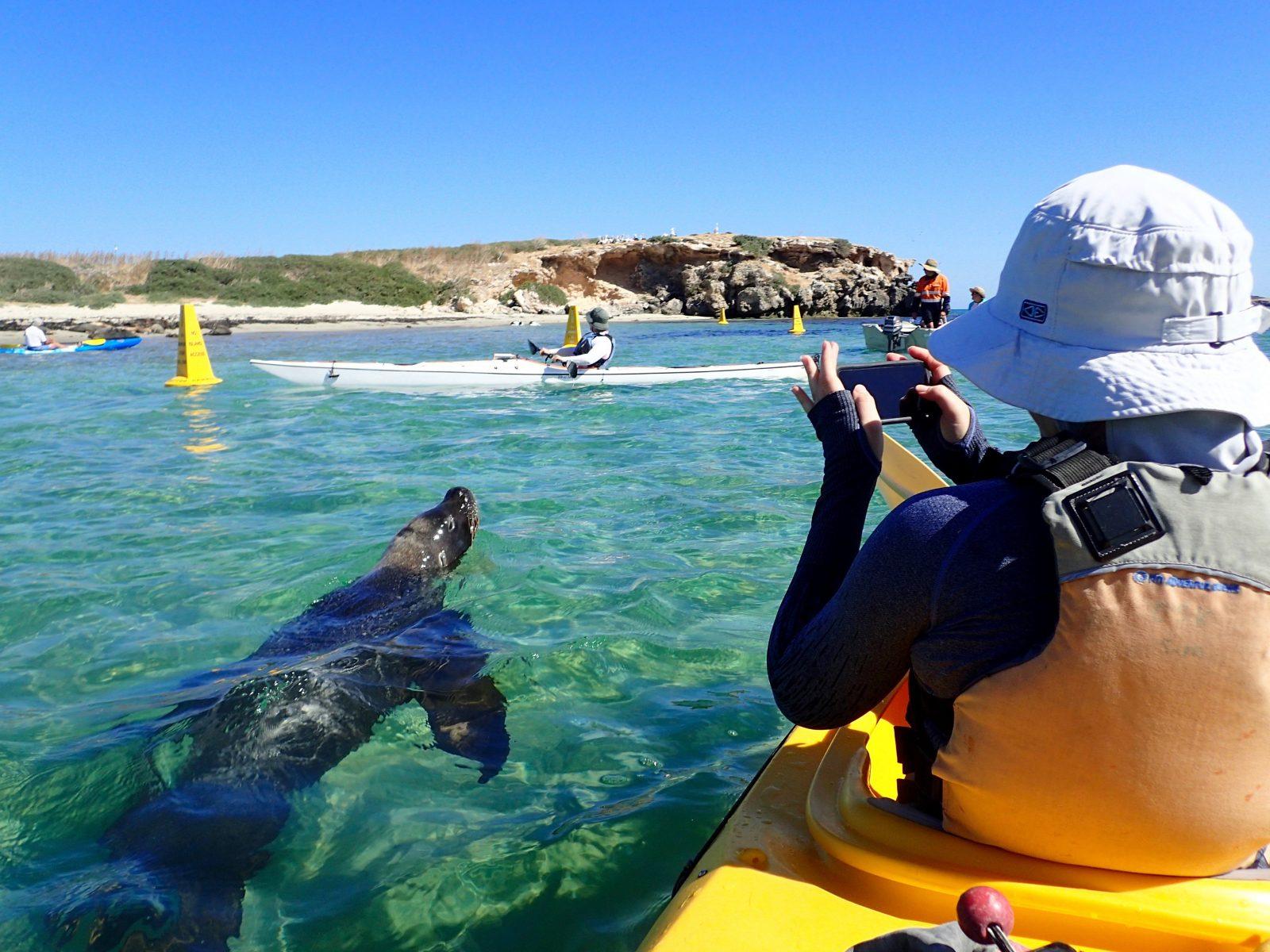 Capricorn Sea Kayaking, Shoalwater, Western Australia
