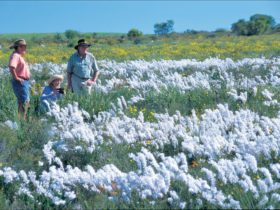 Carnamah-Eneabba Wildflower Drive , Western Australia