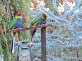 Cartref Park Country Gardens, Western Australia