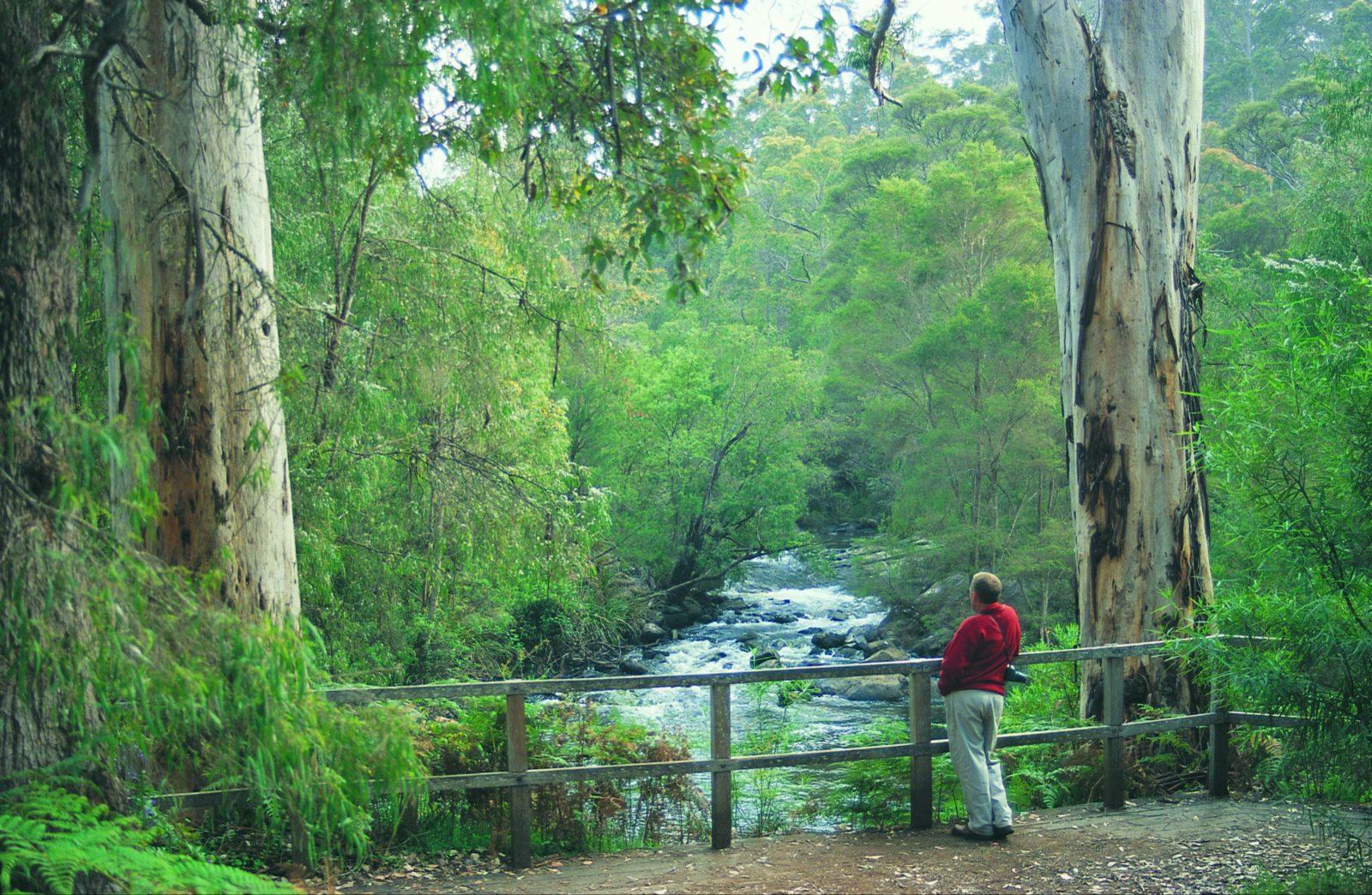 Cascades, Pemberton, Western Australia