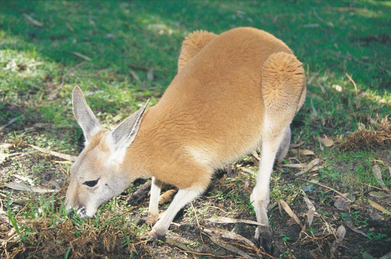 Caversham Wildlife Park, Whiteman, Western Australia