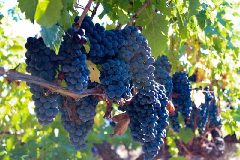 Clairault Wines, Wilyabrup, Western Australia