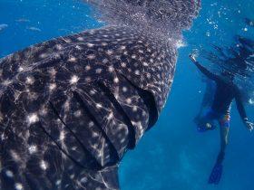 Coastal Water Dive, Bunbury, Western Australia