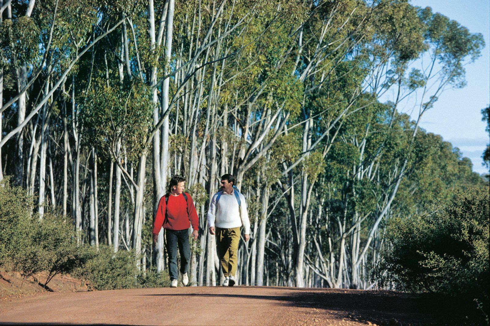 Congelin Camp, Dryandra Woodland, Western Australia