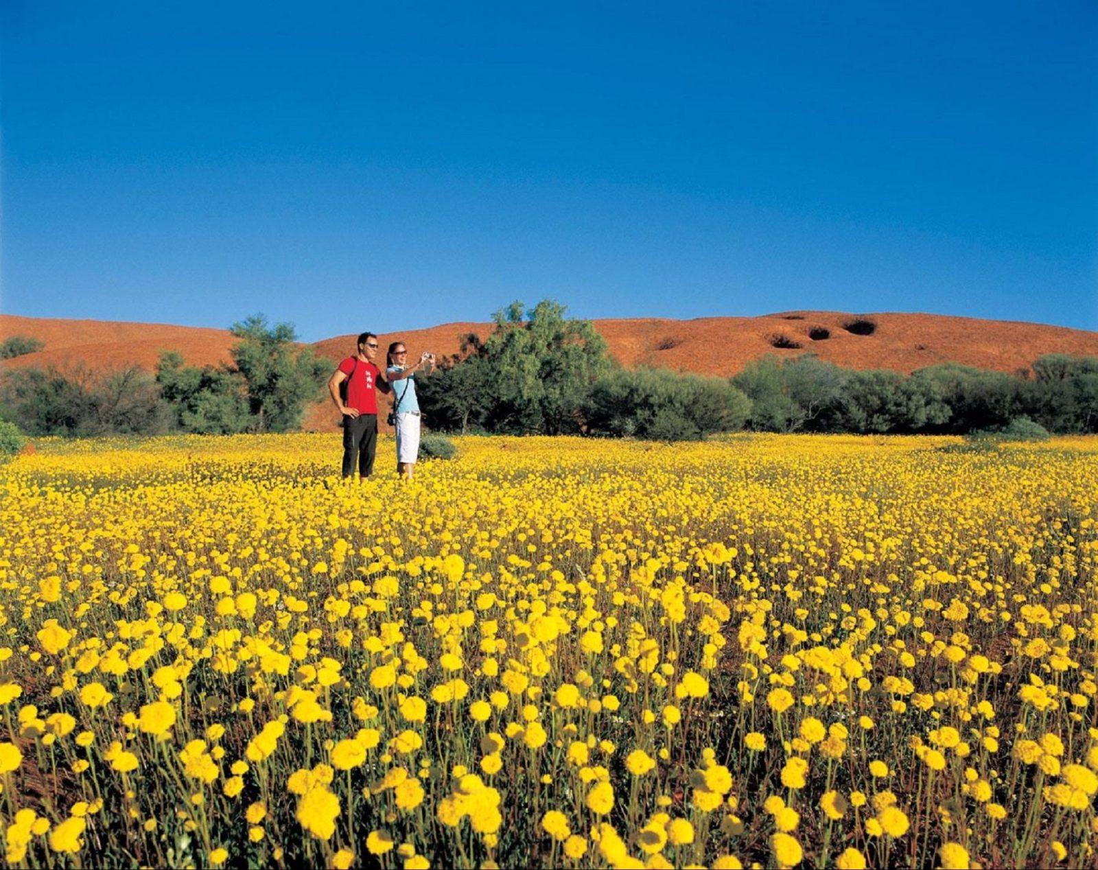 Coorow Farm Wildflower Trail, Coorow, Western Australia