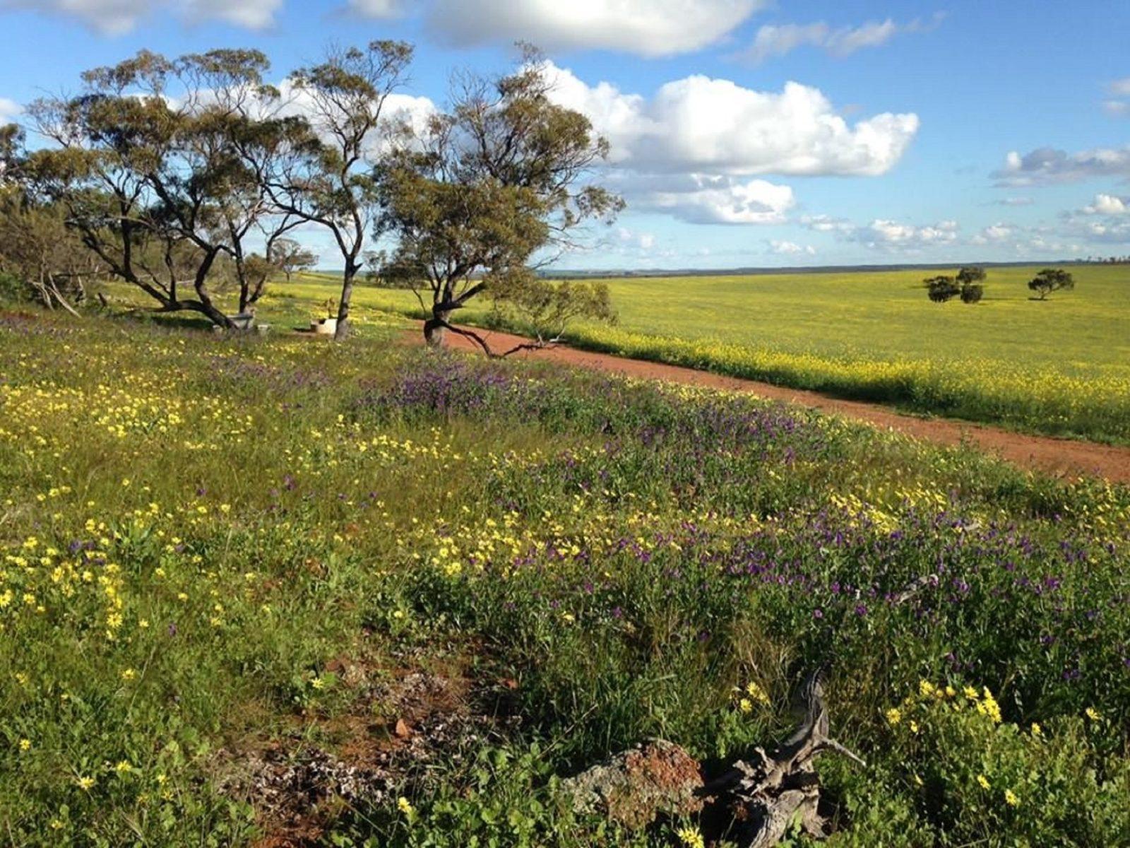 Coorow Wildflower Drive, Coorow, Western Australia