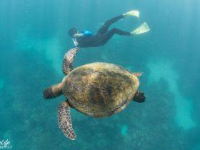 Coral Bay EcoTours, Perth, Western Australia