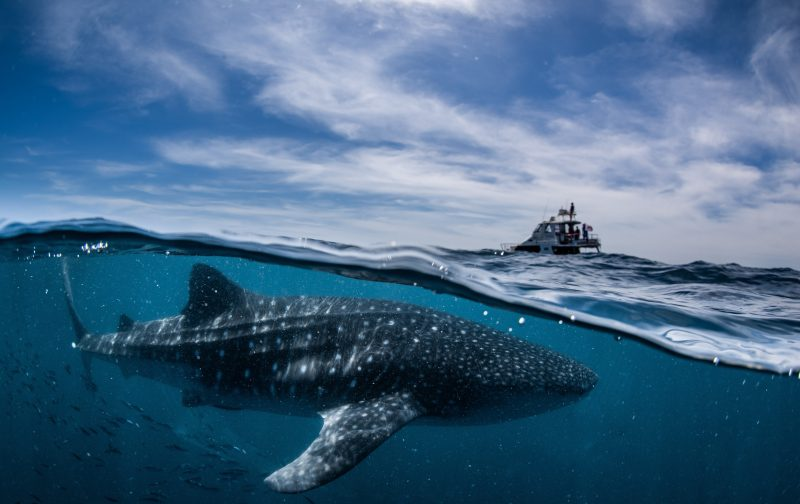 Coral Bay EcoTours, Coral Bay, Western Australia