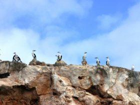 Dirk Hartog Island, Denham, Western Australia