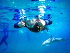 Dolphin Discovery Centre Swim Tour, Bunbury, Western Australia