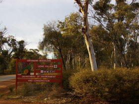 Dryandra Woodland, Cuballing, Western Australia
