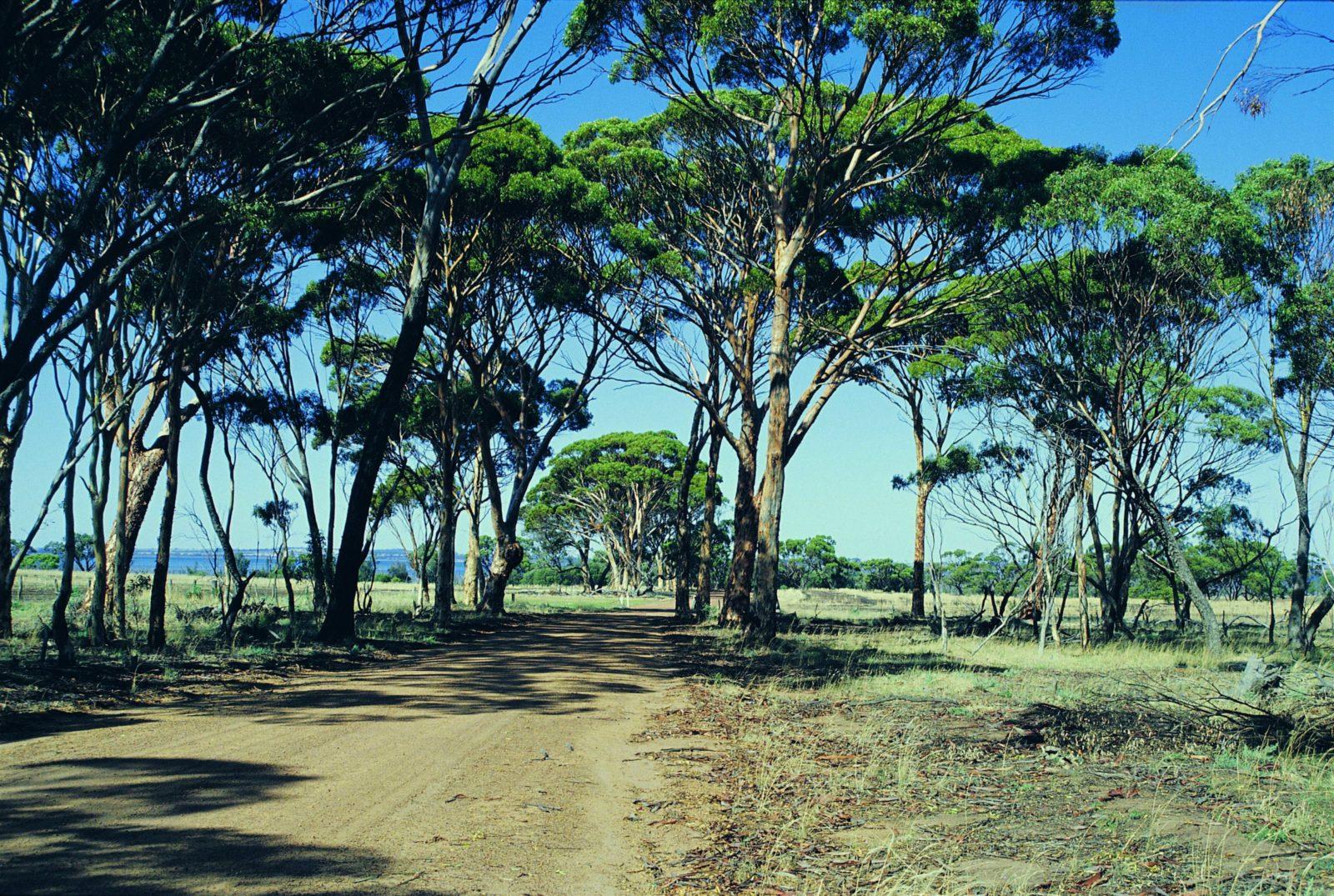 Dumbleyung, Western Australia