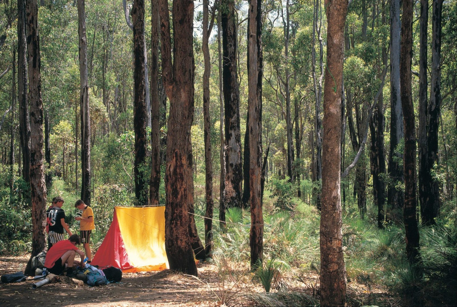 Nanga Bush Camp, Dwellingup