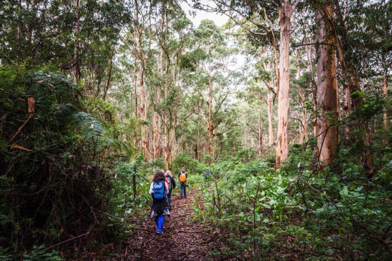 Edgewalkers, Margaret River, Western Australia
