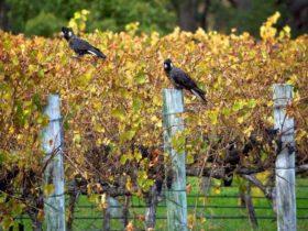Edwards Wines, Cowaramup, Western Australia