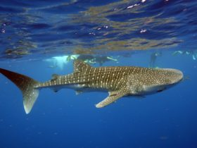 Exmouth Diving and Whaleshark Centre, Exmouth, Western Australia