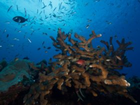 Extra Divers Christmas Island