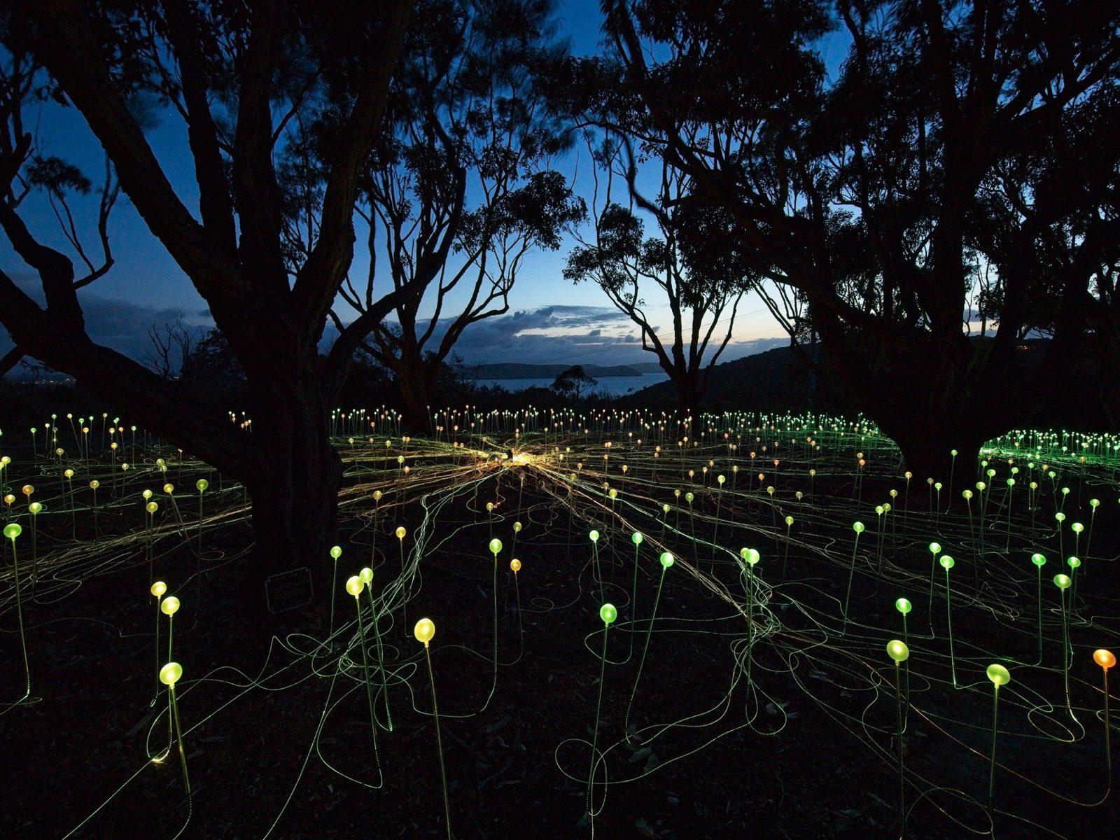 Field of Light: Avenue of Honour, Mount Clarence, Western Australia